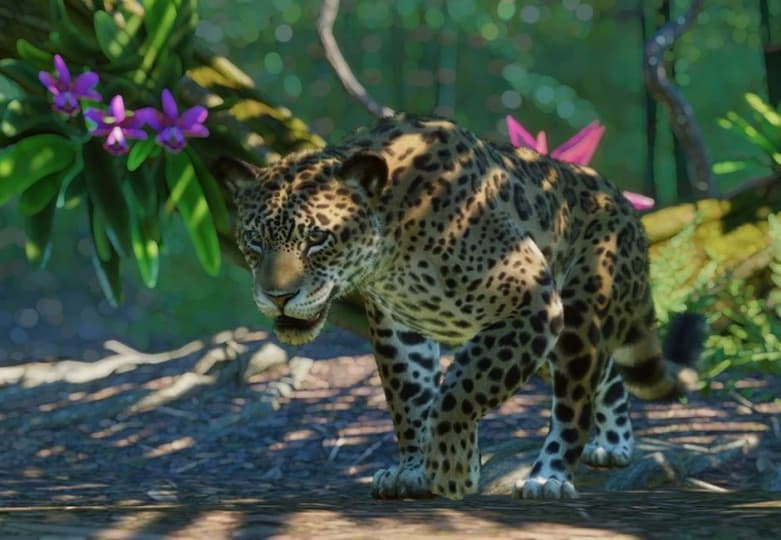 Planet Zoo South America DLC Review Testing the South American Pack - Jaguar