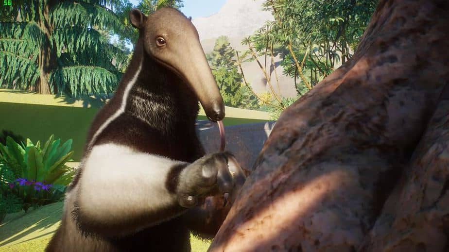 Planet Zoo South America DLC Review  Testing the South American Pack - Giant Anteater