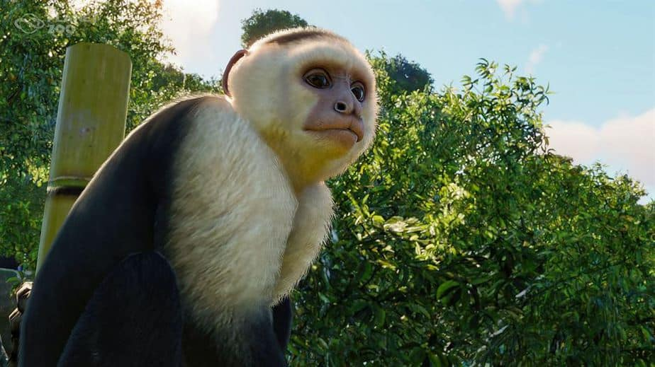 Planet Zoo South America DLC Review Testing the South American Pack - White shoulder Capuchin Monkey